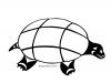 turtle-sqiilqwuqs