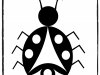 ladybug-smayuqwa