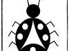 ladybug-smayuqwa-basic