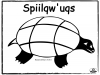 turtle-sqiilqwuqs-basic